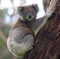 Australia Wednesday Lotto -